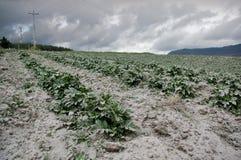 Cotopaxi volcano eruption, Ecuador Royalty Free Stock Images