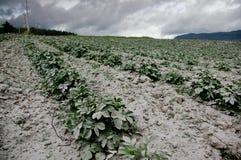 Cotopaxi volcano eruption, Ecuador Stock Image