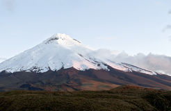 Cotopaxi volcano over the plateau on the sunset. Andean Highland Royalty Free Stock Photos