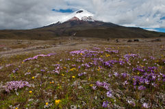 Cotopaxi wulkan obraz royalty free