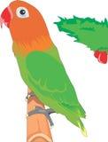 Cotorra rizada del pájaro Ilustración del Vector