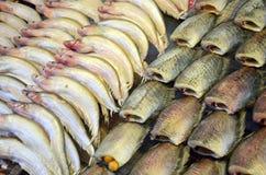 Cotos de los pescados del Osphromemus gorami Foto de archivo libre de regalías