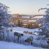 Cotswold landscape with sheep in snow. Gloucestershire, England Royalty Free Stock Photo