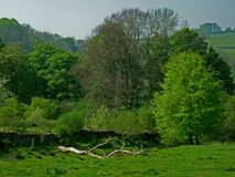 Cotswold landscape of trees and meadow. Royalty Free Stock Photography