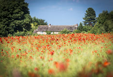 Cotswold stone barn and red poppy field Royalty Free Stock Image