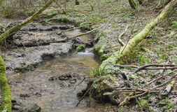Cotswold stream in frozen Woodland Royalty Free Stock Image