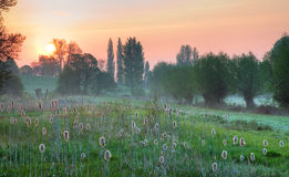Cotswold wetlands Royalty Free Stock Images