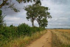 Cotswoldmanier in Engeland Bomen en gebieden Stock Foto's