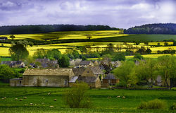 Cotswolds Farming Community, England. Farms in the Cotswolds, with yellow rapeseed fields shining brightly in the sun, and sheep in the foreground.  The Stock Image