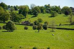Cotswolds green landscape Stock Photography