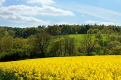 Cotswolds Rapeseed Field and woodland Royalty Free Stock Photos