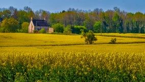 Cotswoldslandbouwbedrijf, Engeland stock fotografie