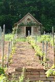 Cottage. A romantic little cottage in a vineyard Royalty Free Stock Image