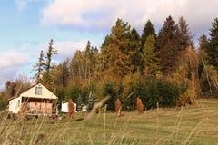Cottage abbandonato accanto al più forrest immagini stock libere da diritti