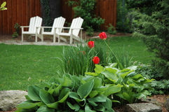 Cottage Chairs. 3 cottage / adarondack white chairs with tulips and hosta in front royalty free stock photography