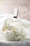 Cottage cheese closeup Stock Images