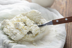 Cottage cheese closeup Royalty Free Stock Image
