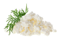 Cottage cheese (curd) heap with dill twig Stock Image