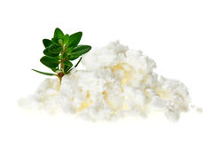 Cottage cheese (curd) heap with thyme twig Stock Photo