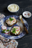 Cottage cheese and garden radish sandwich Stock Image