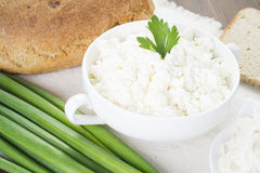 Cottage cheese with sour cream, milk, onion and bread. Posted in white plate on tablecloth and decorated with greenery Stock Images