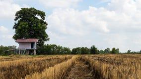 Cottage con la stoppia ed il cielo del riso Fotografia Stock Libera da Diritti