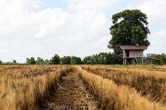Cottage con la stoppia ed il cielo del riso Fotografie Stock Libere da Diritti