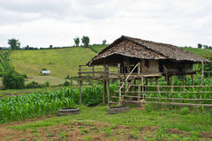 Cottage in a corn field in Chiangmai Stock Images