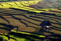 Cottage dans des domaines de riz Images stock
