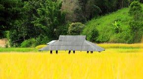 Cottage dans la ferme de riz images stock