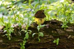 Cottage de conte de fées dans un scarabée de forêt sur un arbre Photo libre de droits
