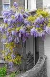 Cottage de glycine Image libre de droits