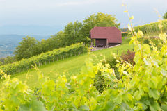 Cottage de vignoble Images stock