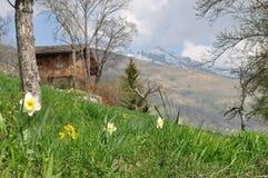 Cottage di legno in prato Fotografia Stock Libera da Diritti