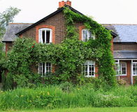 Cottage di rosa rampicante del paese Immagine Stock