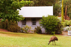 Cottage and emu royalty free stock photo