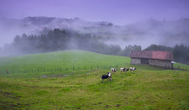 Cottage on farm with cows Royalty Free Stock Photos