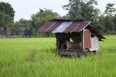 Cottage field. Cottage and rice fields in Thailand stock photo