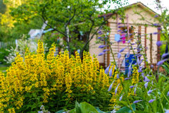 Cottage in flowers royalty free stock photo