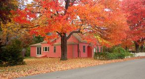 Cottage during foliage season. Colorful house on an autumn day stock images