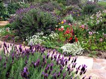 Cottage Garden 1. Beautiful cottage garden and path in full bloom with lavender, poppies and daisies Stock Photography