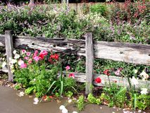 Cottage Garden 2. Beautiful cottage garden and old timber fence Royalty Free Stock Image