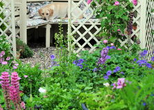 Cottage garden Stock Photography