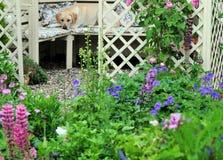 Cottage garden. Pretty cottage garden and gazebo in summer Stock Photography
