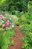 Cottage garden. Pretty path in an english cottage garden Stock Photos