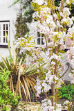 Cottage garden Stock Image