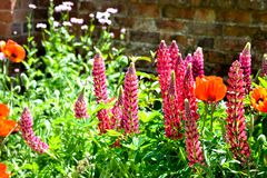 Free Cottage Garden Detail Royalty Free Stock Images - 56700409