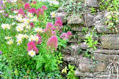 Cottage garden detail Royalty Free Stock Photos