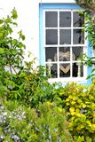 Cottage garden detail Stock Photography