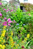 Cottage garden detail Royalty Free Stock Photo